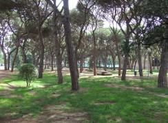 1A FOTO_Parc_Pinetons_3